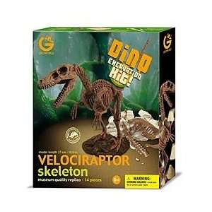 Velociraptor Dinosaur Skeleton Excavation Kit Toys