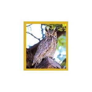 New Magnetic Bookmark Great Horned Owl High Quality Modern Design