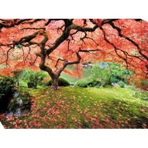 West Of The Wind OU 33686 Japanese Maple Tree 2 All