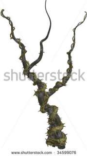 Climbing Vines With Thorns On A White Background Stock Photo 34599076