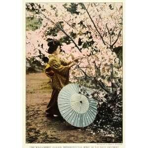 1922 Print Japanese Lady Paper Umbrella Cherry Blossom Tree Sakamoto